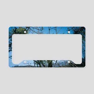 Mistletoe on a tree License Plate Holder